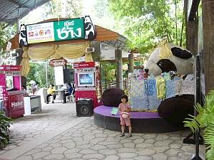 panda_ent.jpg