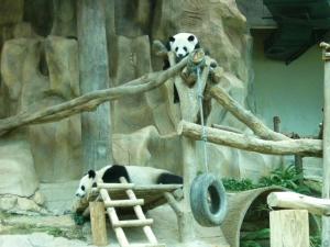 panda_two.jpg